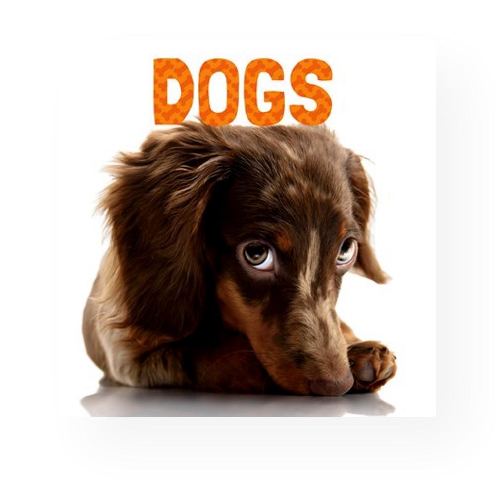Dogs By Stephanie Meyers