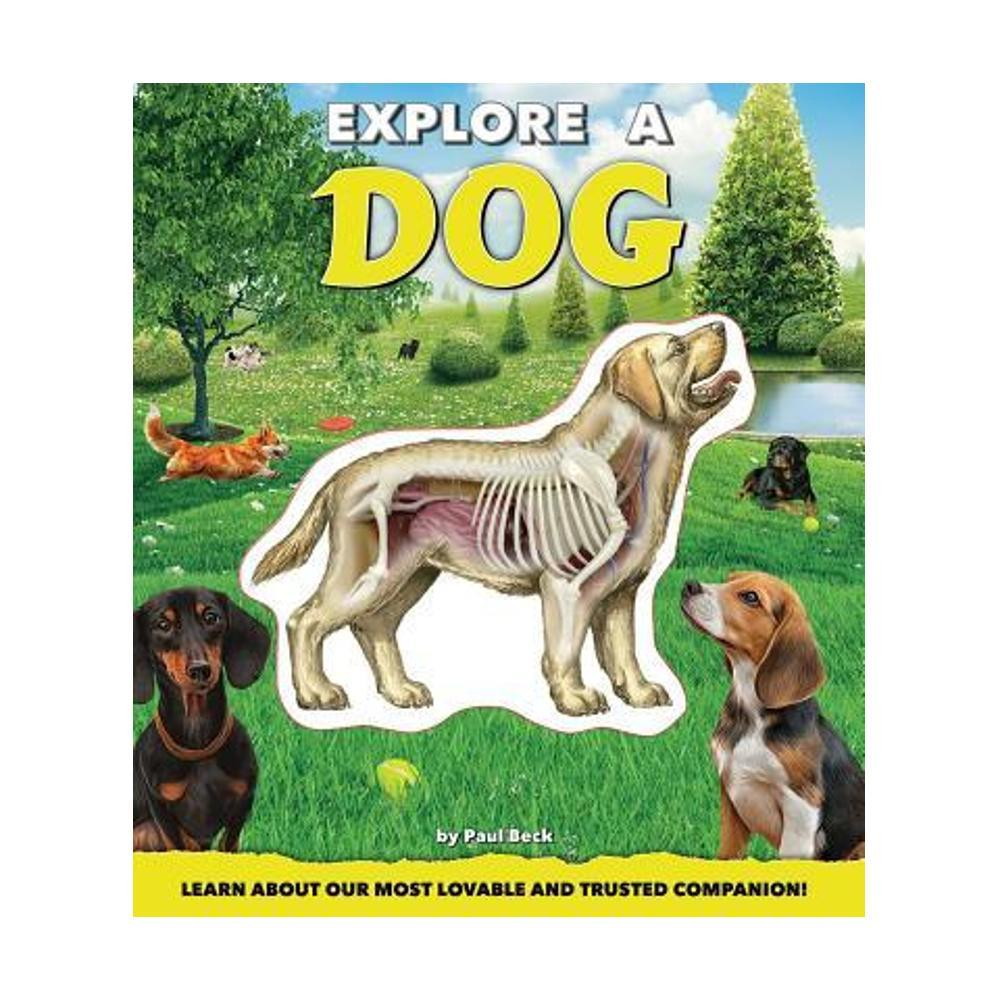 Explore A Dog By Paul Beck